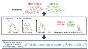 PLAMORF_find mobility motives in RNA